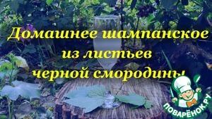 Как приготовить Домашнее шампанское, из листьев черной смородины домашний рецепт с фото