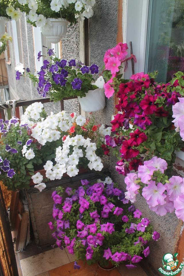 Цветник на балконе. мои петунии.: группа цветовод..