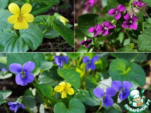 Фото самых первых цветов