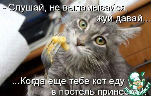 Смешные картинки про котов и котят с надписями