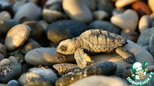 Черепахи детские картинки открытки