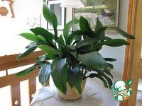 Польза для Ваших растений
