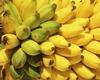 Сможем прожить без бананов?!
