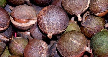 Самый дорогой в МИРЕ орех! - кулинарная статья