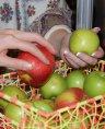 Яблочная кожура – эффективная защита от гипертонии