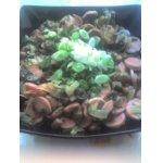 Салат с жареными сосисками