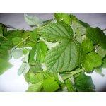 Заготовка-заморозка для витаминного морса