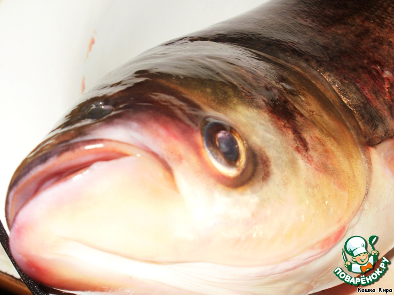 фото толстолобик рыба