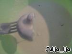 Шампиньоны в НАИхрустящем универсальном кляре ингредиенты