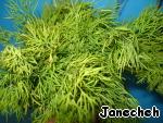Сушка зелени в микроволновке ингредиенты