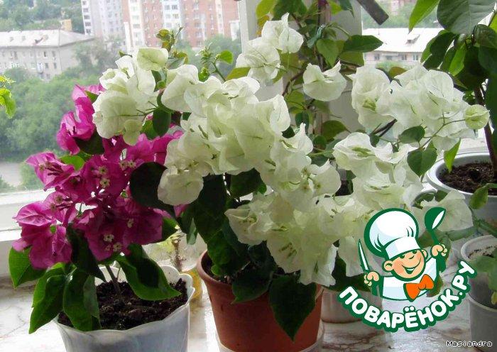 Цветы для квартиры благоприятные