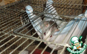 Даже моя домашняя крыска Санни, котрая до этого мирно скучала в своем гамаке,