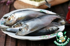 Pilchards (fish you can use any, herring, capelin, herring) gut, cut the head and remove seeds.  I got a giant anchovy!