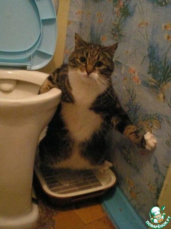 смешные коты: Группа Ни дня без кошки!