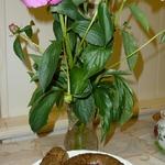 Картофельные колбаски – кулинарный рецепт