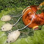 Фаршированная тыква Карета для Золушки