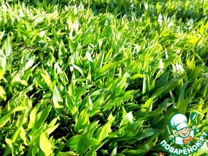 Gathering wild garlic is the 3rd of may.
