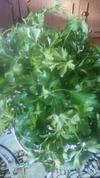 Как сохранить зелень свежей