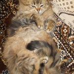 Кое-что о кошачьих