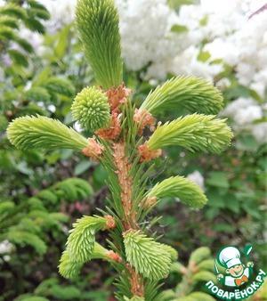 Сироп из елки. Как сварить варенье из молодых сосновых побегов. Характеристика и свойства еловых побегов