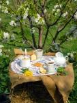 Пробуждение весны и чаепитие