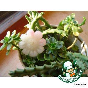 Daisy garden radish