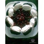 Торт-безе с малиной  и шоколадом. Дорогому Поваренку на День рождения!!!