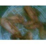 Куриные крылышки под соусом цицибели