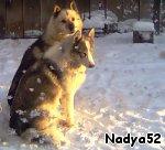 Собачки дружно ждут свою кашку.