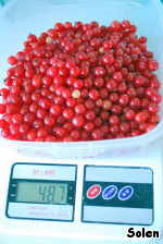 First prepare the jam.  You must release the red currants from the sprigs and weigh (to understand how much sugar you will need) :).